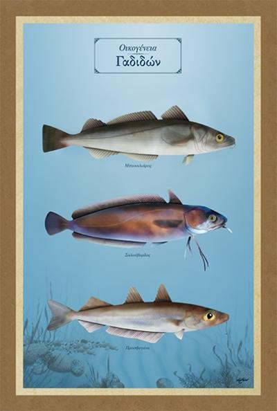 Οικογένεια Γαδιδών - Καμβάς